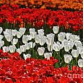 Spring Flowers 16 by Arterra Picture Library