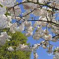 Spring Flowers 24 by Arterra Picture Library