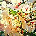 Spring Flowers 27 by Jude Monteleone
