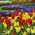 Spring Flowers 4 by Arterra Picture Library