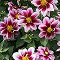 Spring Flowers 4 by Bob Slitzan