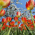 Spring Flowers 7 by Arterra Picture Library
