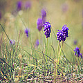Spring Flowers by Diana Kraleva