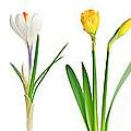 Spring Flowers  by Elena Elisseeva