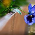 Spring Flowers I by Mary  Smyth