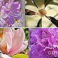 Springtime Blossoms by Dora Sofia Caputo Photographic Design and Fine Art