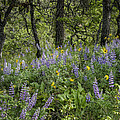 Spring Flowers In The Columbia Gorge by Jean Noren