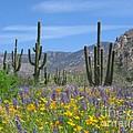 Spring Flowers In The Desert by Elvira Butler