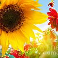 Spring Flowers In The Garden by Michal Bednarek