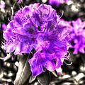 Spring Flowers by Mark Alexander
