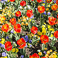 Spring Flowers No. 2 by Greg Hager