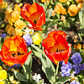 Spring Flowers No. 3 by Greg Hager