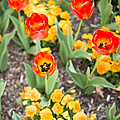 Spring Flowers No. 6 by Greg Hager