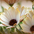 Spring Flowers by Todd Hostetter