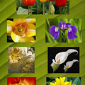 Spring Flowers by Wes and Dotty Weber