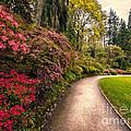 Spring Footpath by Adrian Evans