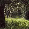 Spring Forest by Yulia Kazansky