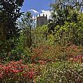 Spring Garden by Deborah Good