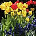 Spring Garden Sunshine Square by Carol Groenen