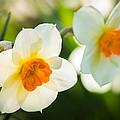 Spring Glow by Bill Pevlor