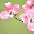 Spring Harbinger by Sonali Gangane