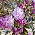 Spring Has Sprung by Breanna Calkins
