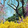 Spring Has Sprung by Jost Houk