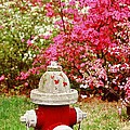 Spring Hydrant by Rodney Lee Williams