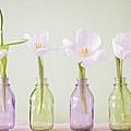 Spring In A Bottle by Steffen Gierok