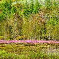 Spring In Acadia's Great Meadow by Susan Cole Kelly
