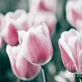 Spring In Love by Angela Doelling AD DESIGN Photo and PhotoArt