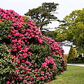 Spring In Muckross Garden - Ireland by Christiane Schulze Art And Photography