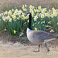 Spring In My Strut by Maria Urso