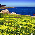 Spring In Pacific Grove Ca by Joyce Dickens