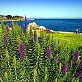 Spring In Pacific Grove Ca Two by Joyce Dickens