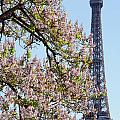 Spring In Paris by Colin Woods