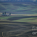 Spring In The Palouse by Sharon Elliott