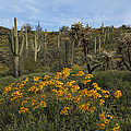 Spring In The Superstition Wilderness by Susan Rovira