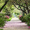 Spring In Washington Dc by Carol VanDyke