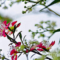 Spring Is In The Air by Kaye Menner