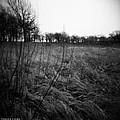 Spring Is Near Holga Photography by Verana Stark