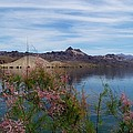 Spring Lake Mohave by Douglas Miller