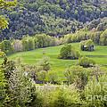 Spring Landscape by Alan L Graham
