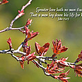 Spring Leaves Greeting Card With Verse by Debbie Portwood