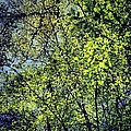 Spring Leaves  by Nic Squirrell