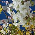 Spring Life In Still-life by Christina Verdgeline
