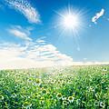 Spring Meadow Under Sunny Blue Sky by Michal Bednarek