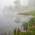 Spring Mist by Dale Kincaid
