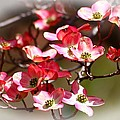 Blossoms In The Spring by Lynn Hopwood