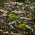 Spring Moss by Jim Shackett